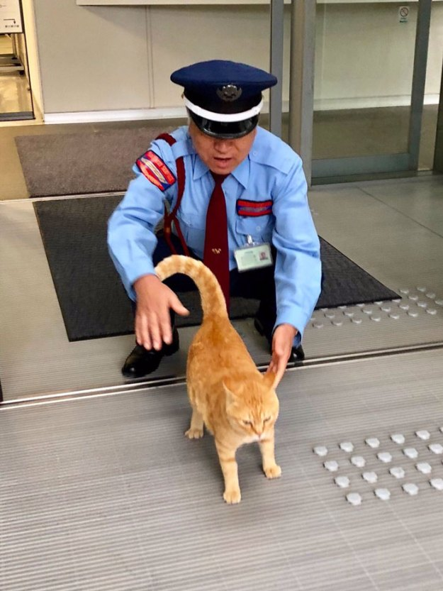 11-5bee7504f0a9c__700 Two Cats In Japan Have Been Trying To Sneak Into A Museum For Years (30 Pics) Design Random