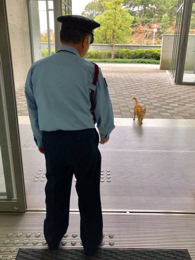 6-5bee74fb16bad__700 Two Cats In Japan Have Been Trying To Sneak Into A Museum For Years (30 Pics) Design Random