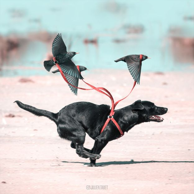 Dog-5bdb8eb9a887d__700 Here's How I Imagine Animals Behave When You Aren't Looking (10+ Pics) Design Random