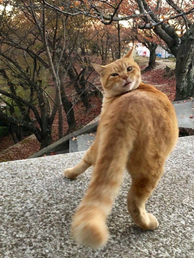 cats-sneaking-security-ken-chan-gosaku-hiroshima-onomichi-city-museum-of-art-5bee7c2ce5702__700 Two Cats In Japan Have Been Trying To Sneak Into A Museum For Years (30 Pics) Design Random