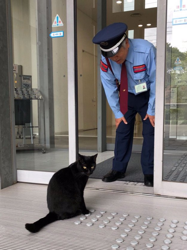 cats-sneaking-security-ken-chan-gosaku-hiroshima-onomichi-city-museum-of-art-5bee7c6026b25__700 Two Cats In Japan Have Been Trying To Sneak Into A Museum For Years (30 Pics) Design Random