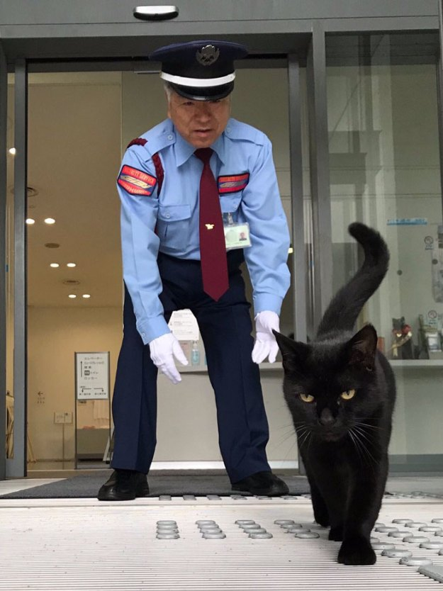 cats-sneaking-security-ken-chan-gosaku-hiroshima-onomichi-city-museum-of-art-5bee7c6bd550f__700 Two Cats In Japan Have Been Trying To Sneak Into A Museum For Years (30 Pics) Design Random