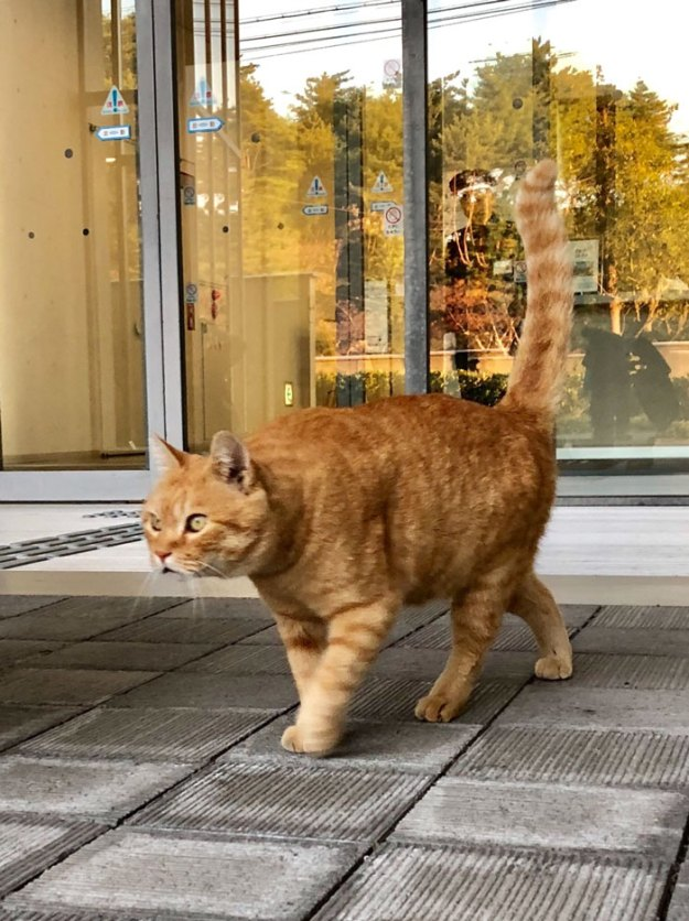 cats-sneaking-security-ken-chan-gosaku-hiroshima-onomichi-city-museum-of-art-5bee7cdb77ca9__700 Two Cats In Japan Have Been Trying To Sneak Into A Museum For Years (30 Pics) Design Random
