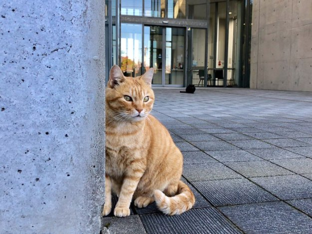 cats-sneaking-security-ken-chan-gosaku-hiroshima-onomichi-city-museum-of-art-5bee7d020f095__700 Two Cats In Japan Have Been Trying To Sneak Into A Museum For Years (30 Pics) Design Random