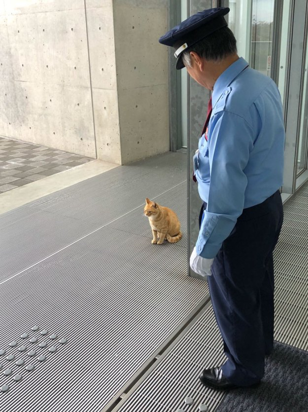 cats-sneaking-security-ken-chan-gosaku-hiroshima-onomichi-city-museum-of-art-5bee7d07de529__700 Two Cats In Japan Have Been Trying To Sneak Into A Museum For Years (30 Pics) Design Random