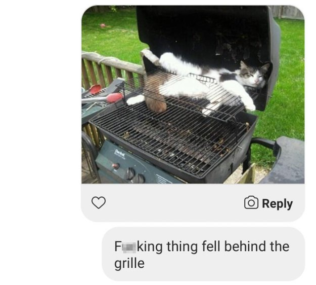 internet-bot-trolling-barbeque-cat8-5c00ee5a46ed7__700 Guy Gets A Message From A Dating Site Bot, Sees How Far He Can Take The Conversation Design Random