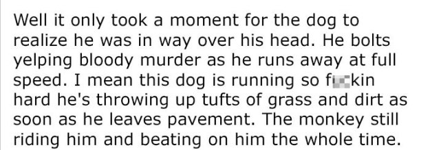 monkey-dog-fight-truck-driver-story-10-5be934419401c__700 Guy Asks People To Share Unbelievable Things That Happened In Public And His Own Story Tops Everything Design Random