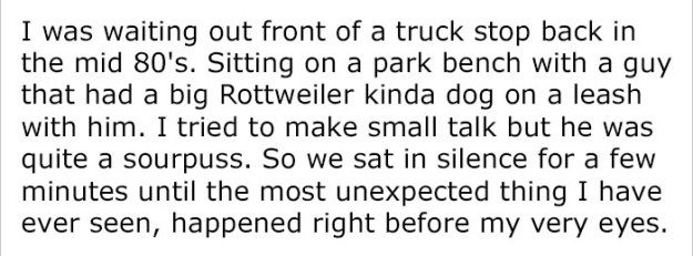 monkey-dog-fight-truck-driver-story-3-5be9341313761__700 Guy Asks People To Share Unbelievable Things That Happened In Public And His Own Story Tops Everything Design Random
