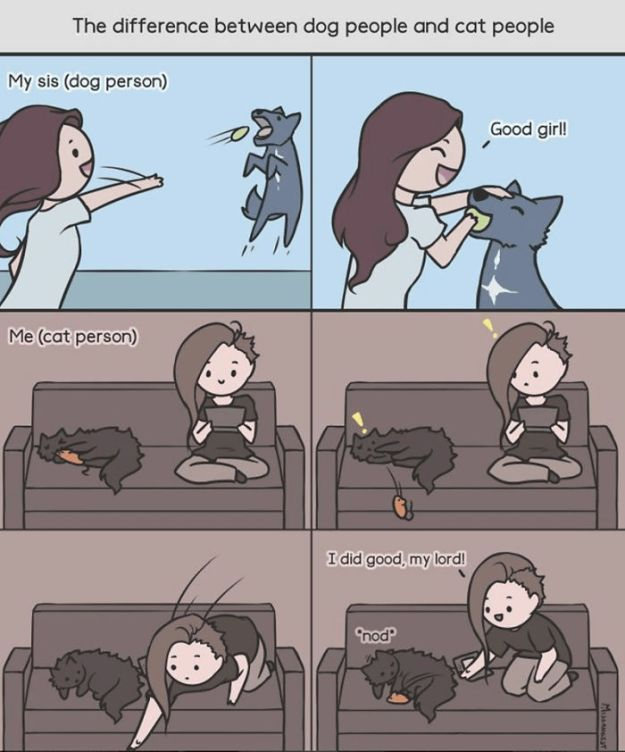 relatable-cat-comics-missangest-5be15d374f990-png__700 12 Funny Comics Reveal The Reality Of Owning A Cat Design Random
