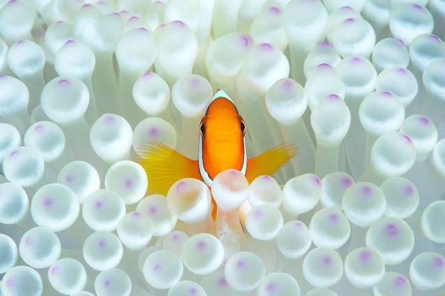 Nemo en home (Animals In Their Environment)