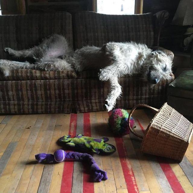 Ha desayunado, ha estado saltando bajo la lluvia y jugando con sus juguetes. Ahora toca descansar hasta mediodía