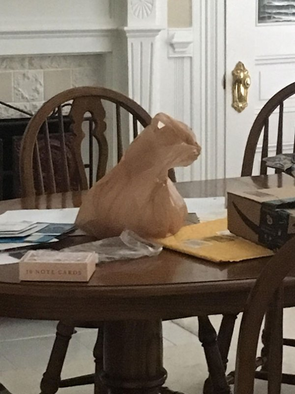 This Plastic Bag Looks Exactly Like A Cat