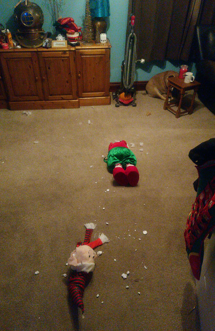 Brand New Christmas Decorations, Dog Did Not Approve