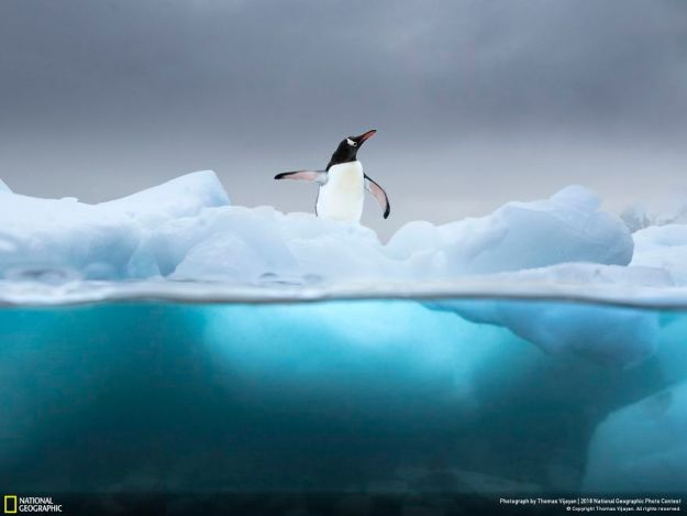 national-geographic-nature-photographer-of-the-year-2018-winner-69-5c0a360c536fe__880 50 Of The Most Incredible Photos Of The National Geography Photo Contest Of 2018 Design Photography Random