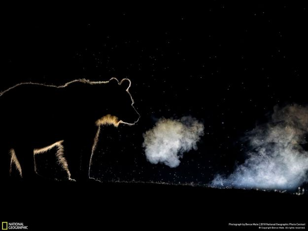 national-geographic-nature-photographer-of-the-year-2018-winner-73-5c0a361488cf3__880 50 Of The Most Incredible Photos Of The National Geography Photo Contest Of 2018 Design Photography Random