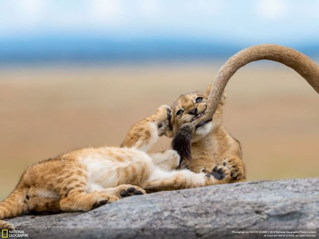 national-geographic-nature-photographer-of-the-year-2018-winner-9-5c0a359108be8__880 50 Of The Most Incredible Photos Of The National Geography Photo Contest Of 2018 Design Photography Random
