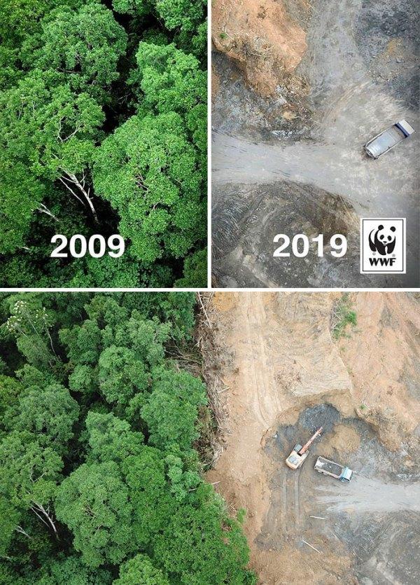 #10yearschallenge Against Deforestation