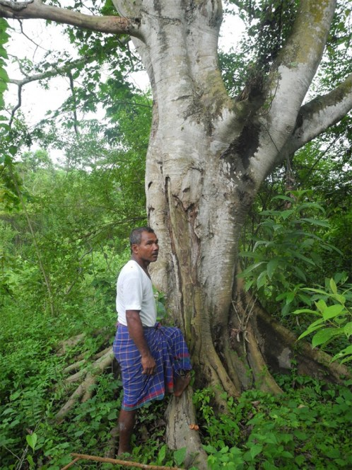 Man Plants A Tree Every Day For 40 Years Now Has A Forest Bigger Than Central Park
