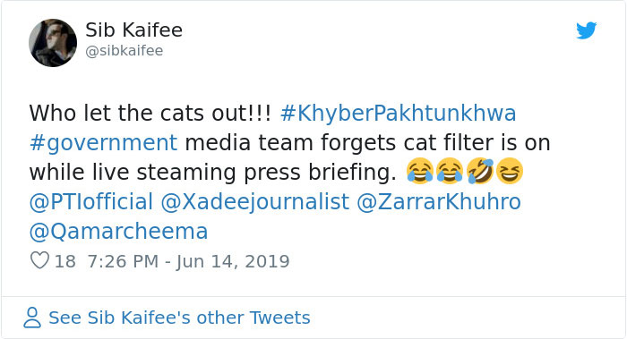Pakistani Government Officials Accidentally Turn On Cat Filter During Facebook Live, Funny Reactions 9