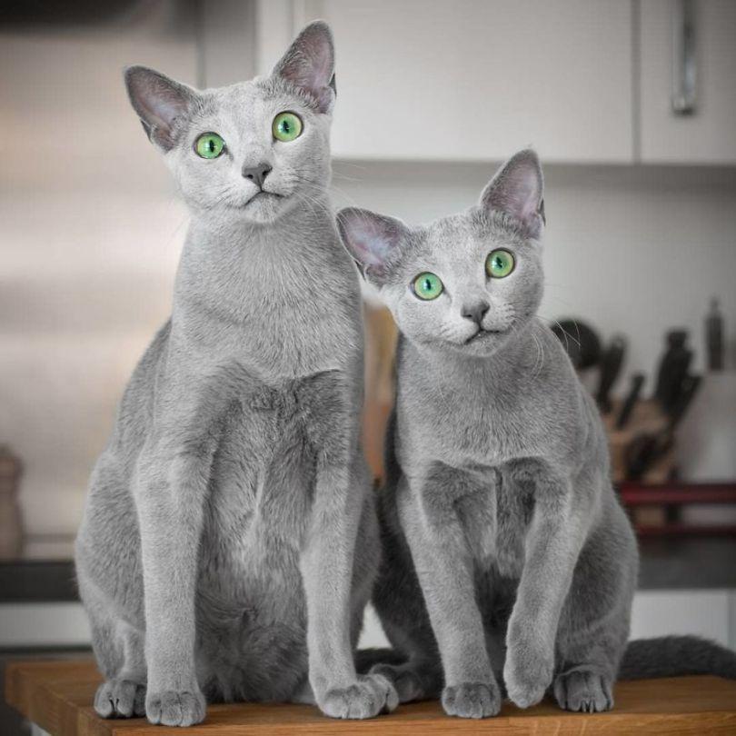 47693844 471601916702578 3635972329165176931 n 5d379b668654c  880 - Olhar felino: Gatos lindos têm olhos hipnotizantes