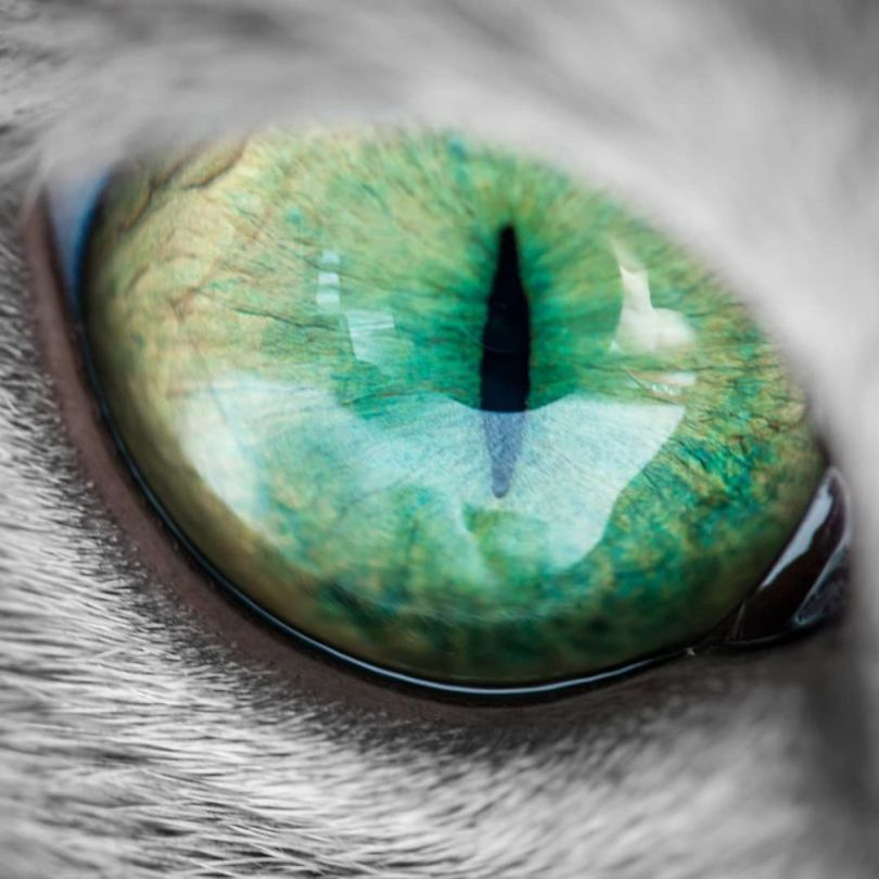 58454001 661695497614707 7367668563086585114 n 5d379c501cd79  880 - Olhar felino: Gatos lindos têm olhos hipnotizantes