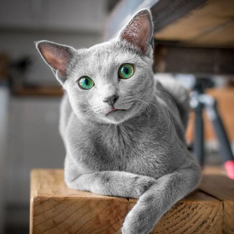 Bx7ndNagnHh png  880 - Olhar felino: Gatos lindos têm olhos hipnotizantes