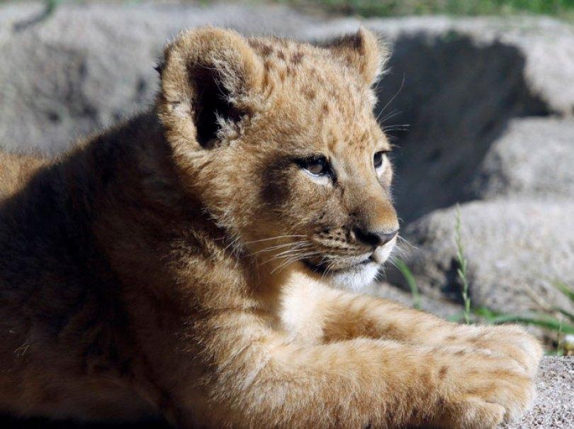 Créditos de imagem:zoológico de Dallas