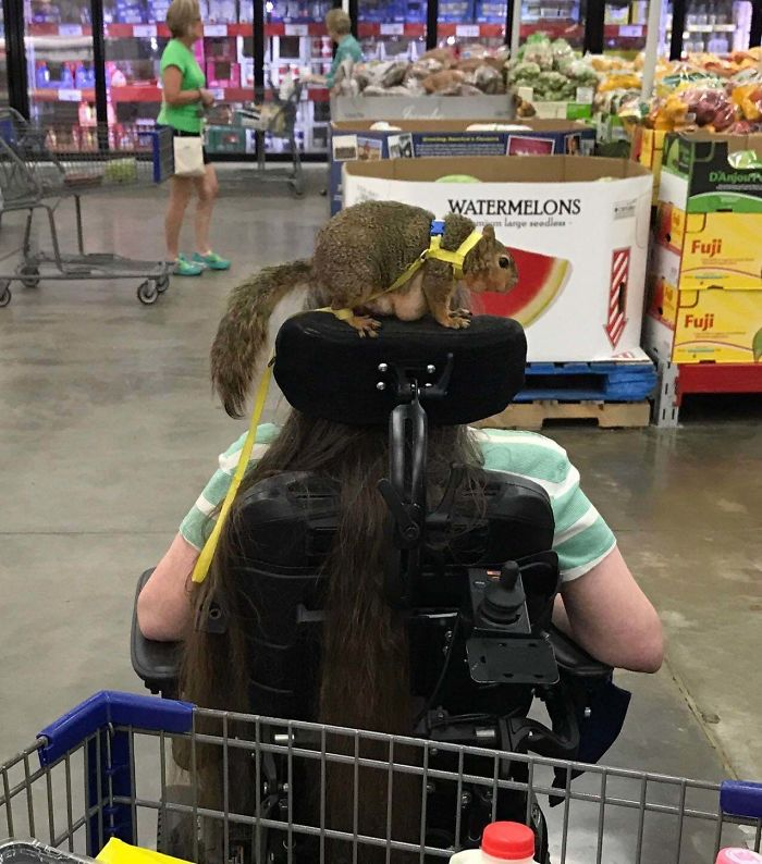 30 Idiot People Who Dont Deserve To Own A Pet 28
