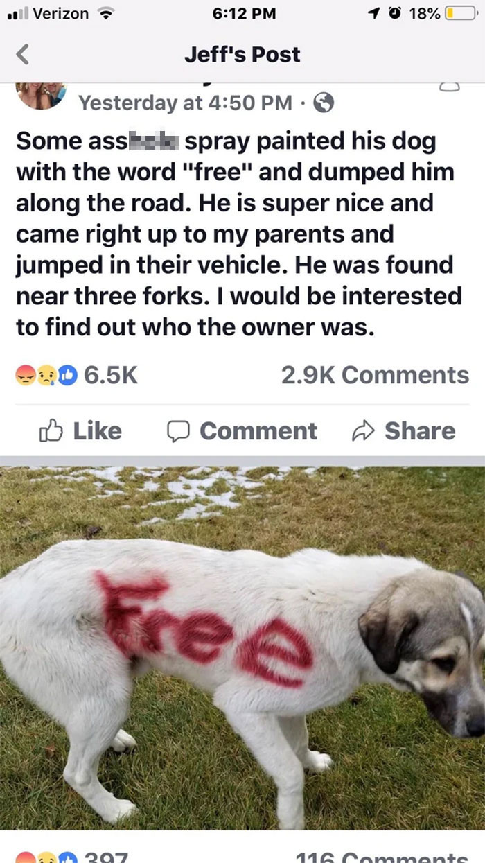 30 Idiot People Who Dont Deserve To Own A Pet 10