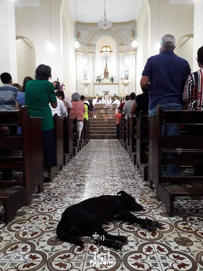 53557082 613355089112957 7944883693015793664 n 5daf8fe98de8b  700 - O que fez o cachorro ao ver a porta da igreja aberta?