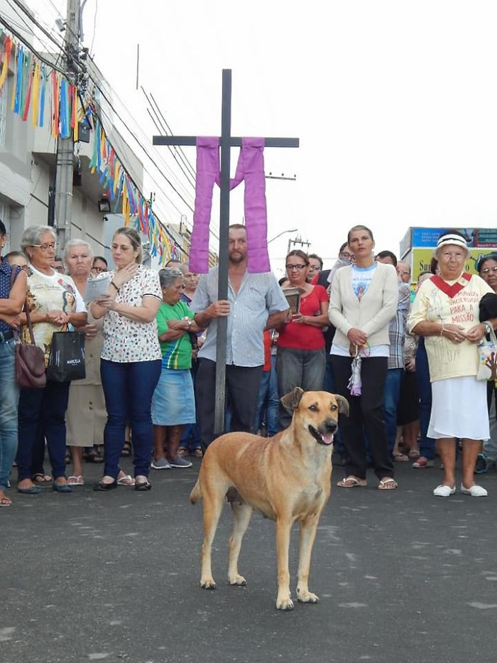 Brazilian priest welcomes stray dogs inside church to be adopted 5daff828e7f6c  700 - O que fez o cachorro ao ver a porta da igreja aberta?
