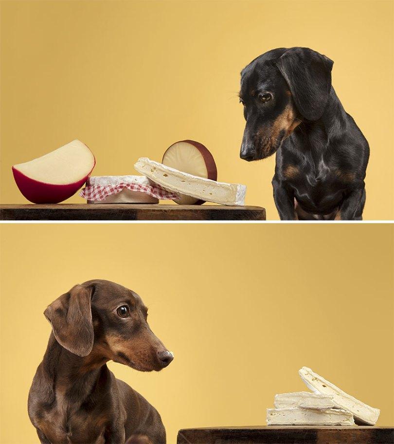 I took a series of photos that captured dogs and their relationship with food 5d9df7784db61  880 - Fotógrafo de animais de estimação