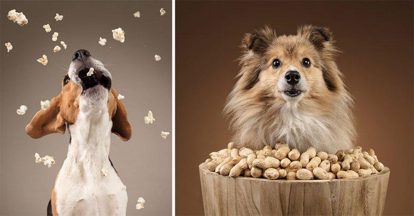 I took a series of photos that captured dogs and their relationship with food 5d9df810d8e06  880 - Fotógrafo de animais de estimação