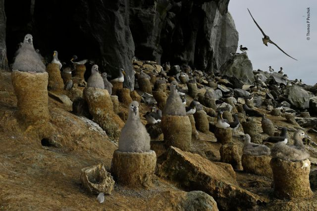"""The Albatross Cave"" By Thomas P Peschak, Germany/South Africa, Animals In Their Environment, Highly Commended 2019"