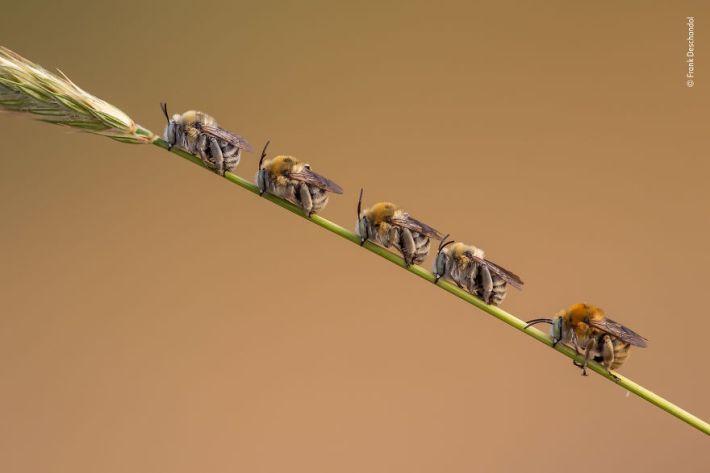 """Bee Line"" By Frank Deschandol, France, Behaviour: Invertebrates, Highly Commended 2019"