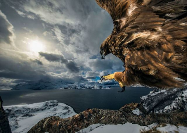 """Land Of The Eagle"" By Audun Rikardsen, Norway, Behaviour: Birds, Winner 2019"