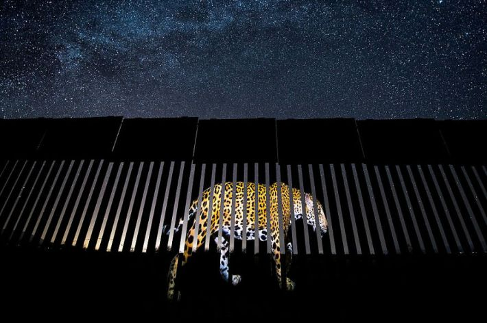 """Another Barred Migrant"" By Alejandro Prieto, Mexico, Wildlife Photojournalism, Winner 2019"