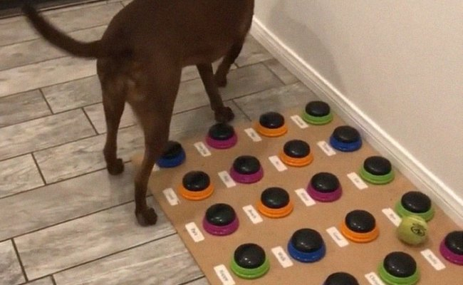 Happy Ball Want Outside Dog Learns To Talk Using A Word