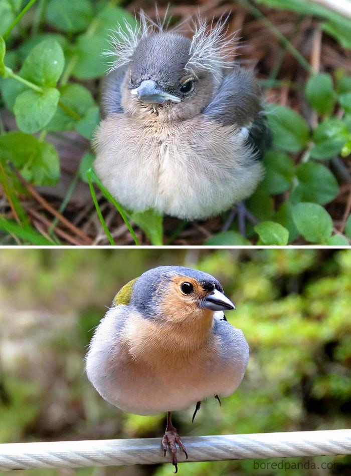 Baby Bird Hair : Birds, They're, Babies, Versus, Grown, Bored, Panda