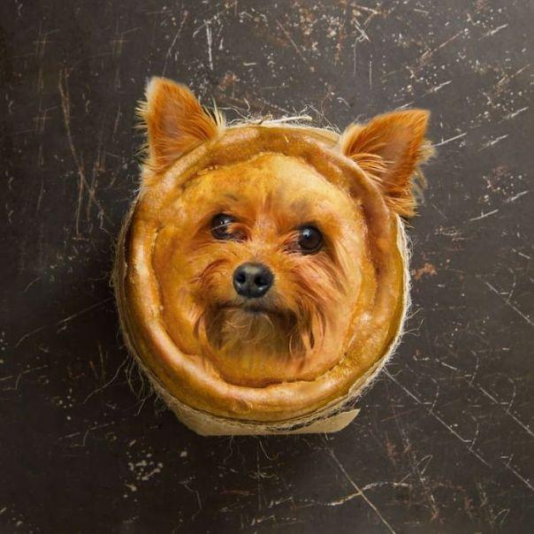 Pyorkie Pie