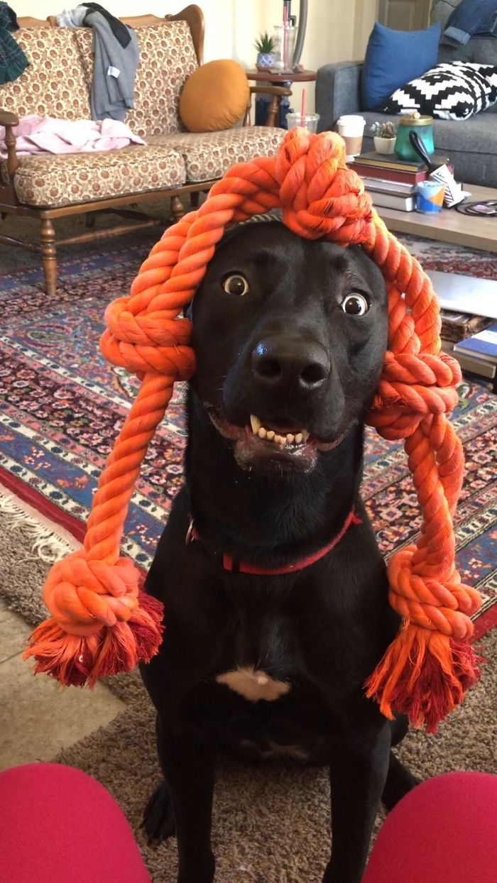 This Online Community Shares The Silliest Dog Photos Where Their Teeth Are Visible In A Funny Way (30 Pics) 22