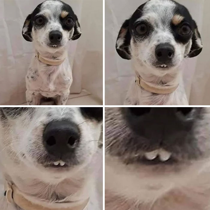 This Online Community Shares The Silliest Dog Photos Where Their Teeth Are Visible In A Funny Way (30 Pics) 3