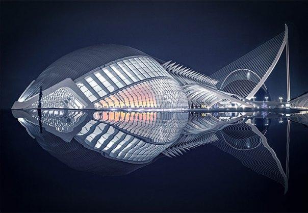 """Fish"" By Pedro Luis Ajuriaguerra Saiz, Winner Of The Judge's Prize"