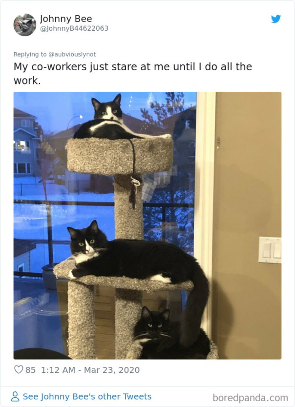 Working-From-Home-Quarantine-Pet-Co-Worker-Photos