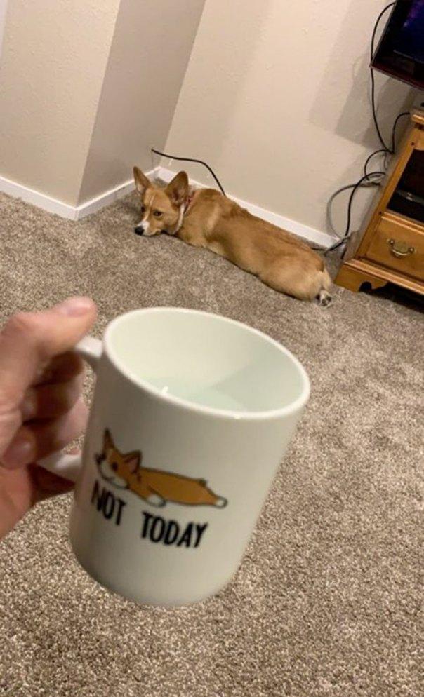 Gus Disapproves Of The Mug Making Fun Of Him
