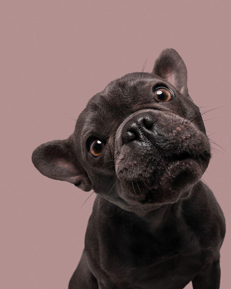 """18 Louie 5ea16de44d55d  880 - Instagram """"Bom Pra Cachorro"""" de Elke Vogelsang"""