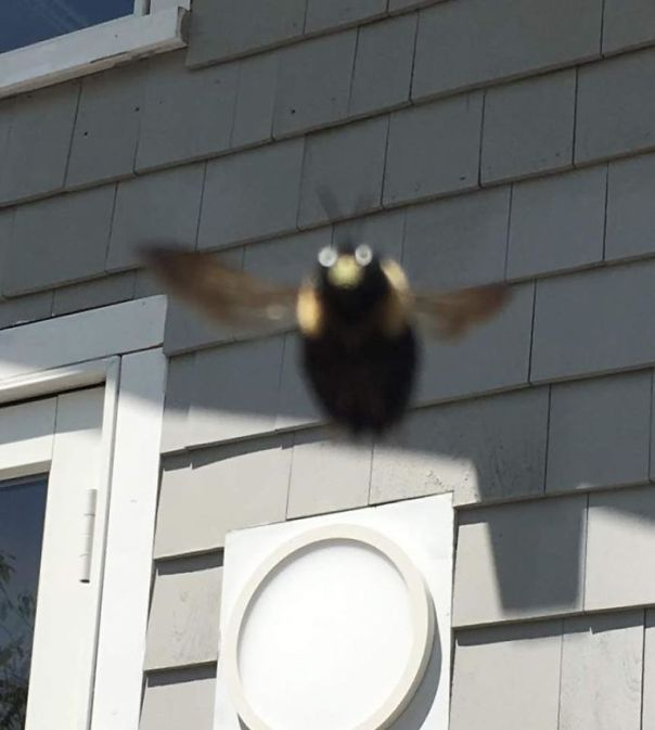 I Took This Picture Of A Carpenter Bee Last Summer