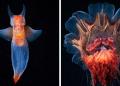 The Alien Beauty Of Underwater Creatures In Alexander Semenov Photos (91 Pics)