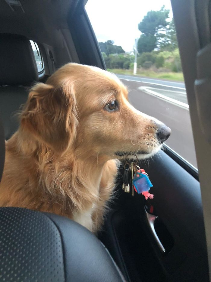 This Is Billie. She Never Understood Why I Had A Set Of Keys To Bring In The Car And She Didn't. I Got Her A Set Of Her Own And Now She Insists On Bringing Them Anytime We Go For A Drive!