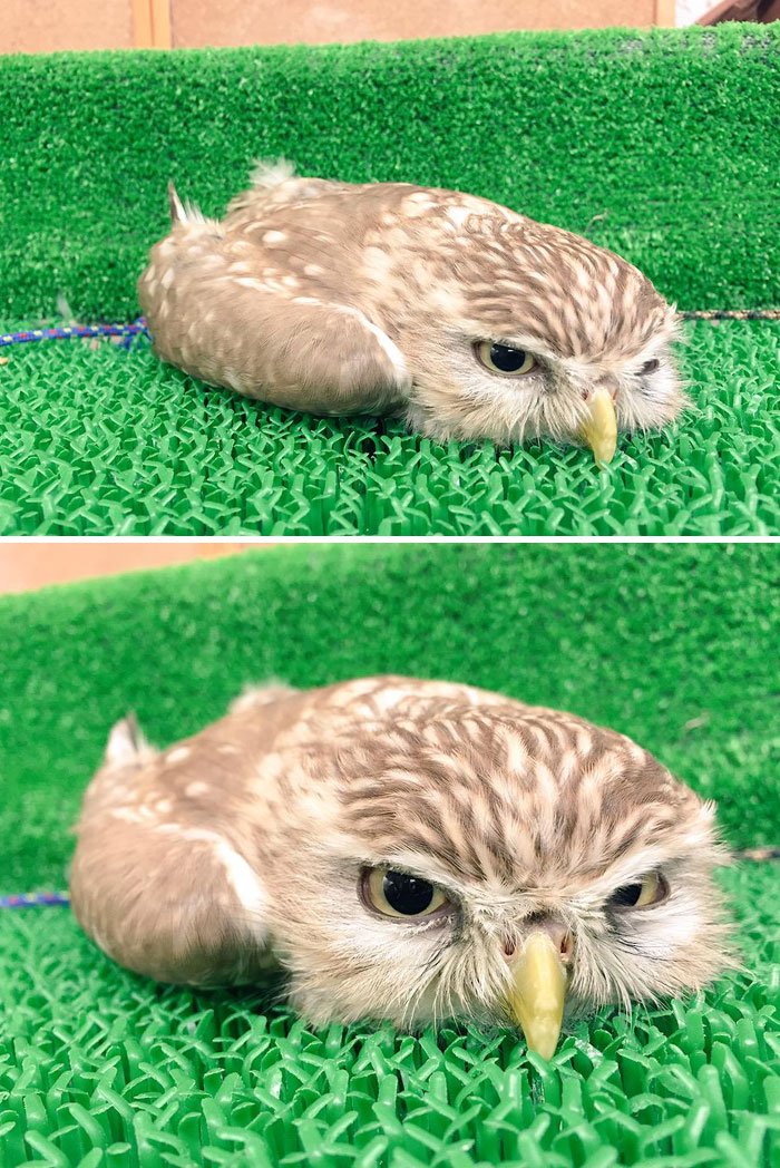 Baby Owls Legs : People, Learning, Sleep, Their, Faces, Bored, Panda